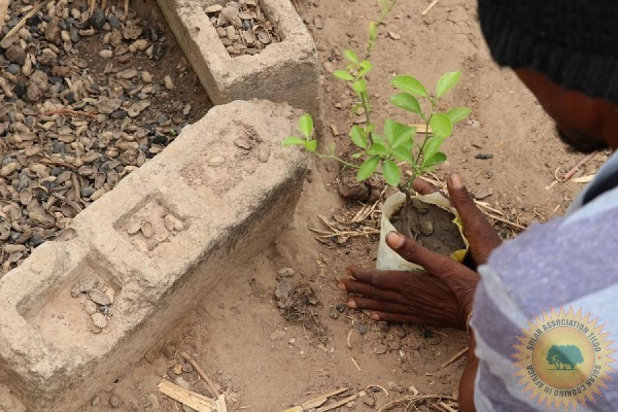reforestation, Gambia, Tiloo